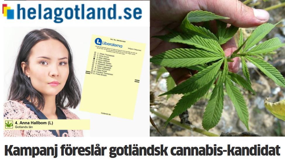 Kampanj föreslår gotländsk cannabis-kandidat